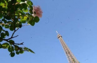 roses-flowers-eifel-tower-paris.jpg