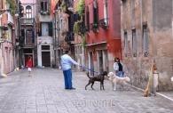 European-Italy-Venice-dogs-golden-retriever-couple-romance-amore.jpg