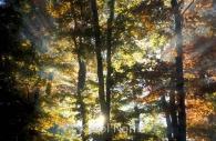 Canada-ontario-trees-sunlight-sunbeams-fall-colours-divine-light.jpg