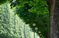 champs-elysees-paris-trees-lamps.jpg