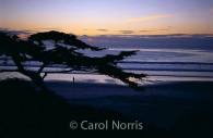 America-Carmel-California-Cyprus-tree-lone-figure-ocean-sunset.jpg