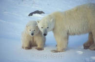 Polar-bear-mother-baby-cub-snow.jpg
