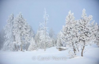 America-yellowstone-national-park-winter-hawfrost-trees-snow-montana-3.jpg