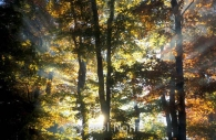 Canada-Ontario-Fall-colours-sunburst.jpg